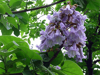 紫式部 風水