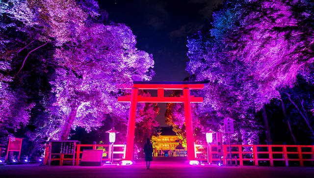 下鴨神社 糺の森の光の祭 Art by teamLab  supported by beachwalkers (6493)