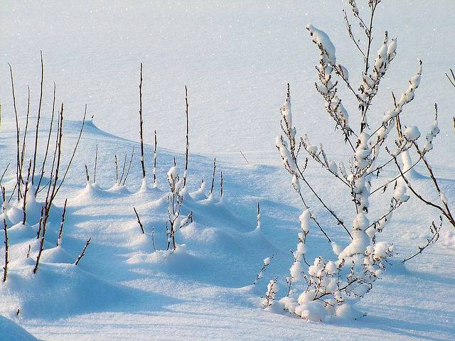 Free photo: Winter, Frost, Snow, Plants - Free Image on Pixabay - 234721 (6032)