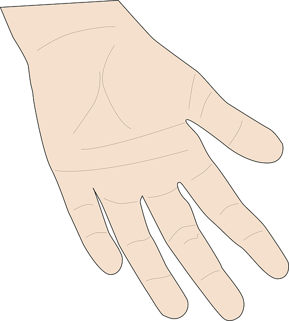 Free vector graphic: Hand, Person, Skin, Open, Palmist - Free Image on Pixabay - 146478 (30374)